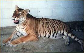 历数世界上十大著名杂交动物