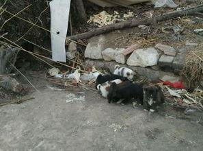 怀孕母狗得知,主人要把它卖给收狗的后,它竟做出让人震惊的抉择