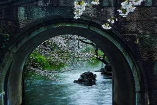 杭州·太子湾   绍兴·宛委山   桃... 爬到桃园的最高处,一览粉色的花...