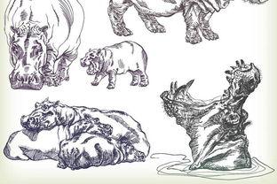 素描动物老虎大象豺狼河马狮子马牛狗羊驴