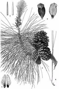 植物科学画 深藏功与名