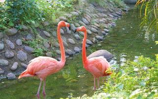 ...林公园动物们的神秘世界