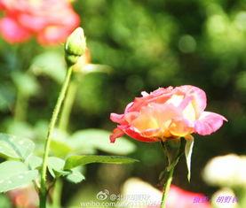 绽放的花儿