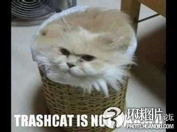 艹猫0补丁krkr2-囧猫的23种极致表情