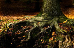 长镜头的魅力   落叶与根的对比   平常大家拍摄秋色注意力在天上,而...