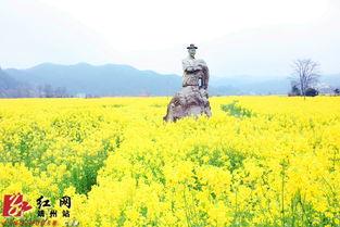靖州农民自办油菜花节 灿烂 开幕 千亩花海引人醉