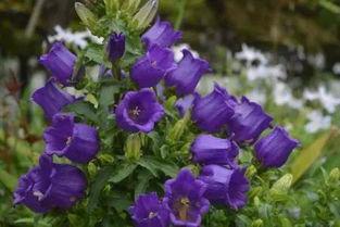 绿植知识 什么花是在夏天播种的