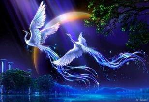 轻风婉韵,翎若破空之白雪,羽冠昂屹,似惊鸿之白练.展翼而飞,熠...