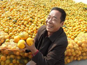 南丰蜜桔通过国家商标注册,打上南丰蜜桔注册商标包装的蜜桔,在市...