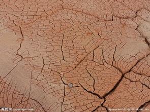 干旱 地裂图片