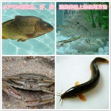 ...鱼虾蟹 泥鳅 黄鳝养殖上的使用方法