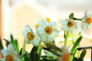 初春绽放的花儿
