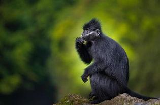 ...寻黑叶猴 探秘恐龙蛋窟 第四届跨界科考启动,跟随 动静 了解一下