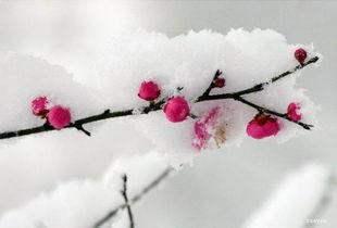 描写雪后的唯美句子