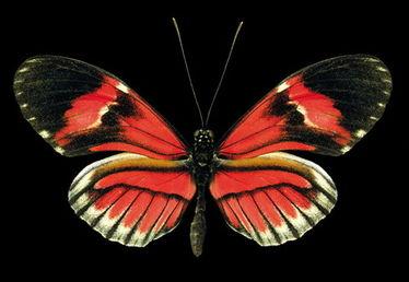 怎样折叠蝴蝶