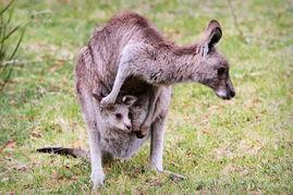 ...萌求抱又求摸的动物们