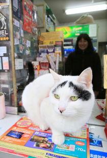 艹猫0补丁krkr2-八字眉猫咪因为眉毛形状呈