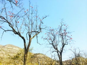 树上,不时噼噼啪啪地掉落在地上……