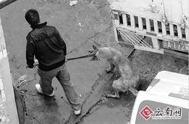 自愿被屠宰吃肉的许明梯-拖去宰杀-记者蹲守一个月暗访杀狗黑作坊 杀狗房满处血污