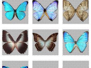 ...蝴蝶PNG透明背景免扣素材图片 模板下载 1.49MB 其他大全 标志丨...