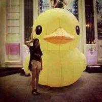 动漫小黄鸭头像 小黄鸭头像