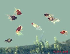 苏绣图案八鱼图
