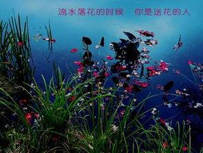 #过年#之六角花落窗花