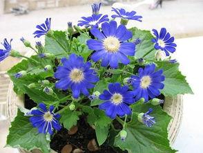 这是什么样的花