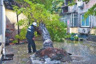 郑州 树倒墙塌趟水上学