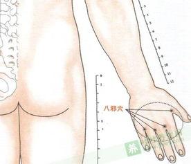 八邪的准确位置图 八邪穴位位置图 咔咔养生网