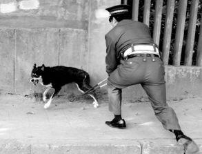 狗夹、狗笼、木棍一起上阵,昨天上午,杭州市城市执法局的队员根据...