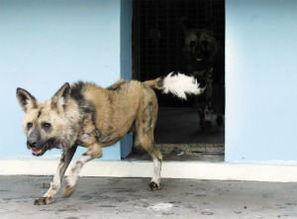 情趣,又可增强狗狗的体质和培育狗狗的胆量.犬类其实天生就具有游...
