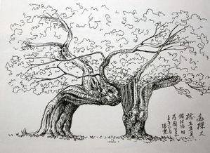 素描风景图片简单一点的-黄瑞霖钢笔画速写作品出版广受欢迎 八闽风姿