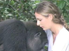 全国最大三级图片人与动物色情网-长大成人后,25岁的英国女子与大猩猩重逢,深情相拥.-英国女子与...