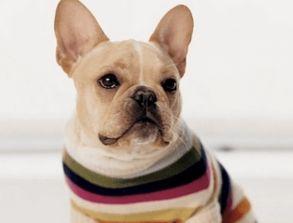 狗狗英文名字大全洋气