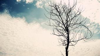 落雨孤独-落雨