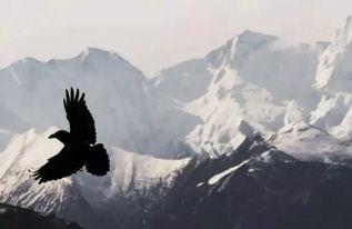 雄鹰能翱翔蓝天之上,就是善于借用上升气流的势能-代购面临重重困...