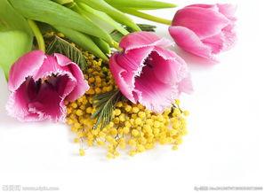 一束花粉色郁金香图片