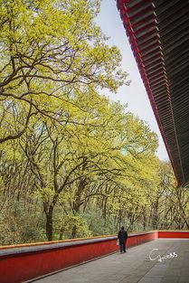 对称,而明孝陵的神道却与地宫并不在一条直线上,而是向西南弯曲延...