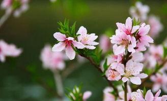 描写春天花儿开放的比喻句