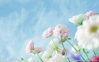 花朵的绽放图片