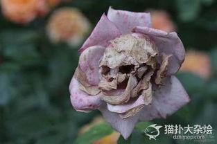 这朵花好恐怖