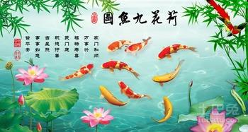 的意思,九条鲤鱼在水里游来游去还有