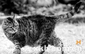 只年满39岁的超级老猫!相当于人类的172岁!   报道说,这只名叫露...
