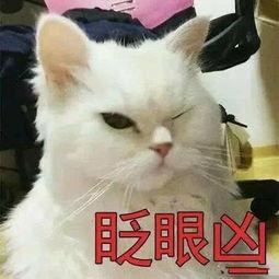 表情 超级凶的猫咪表情包 搞笑频道 手机搜狐 表情