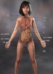 日本3D美女人体解剖图 2 14