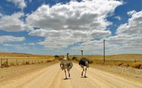 敢问路在何方,路在脚下 -禽兽的世界你不懂