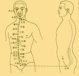 异脉者-经八脉是指十二经脉之外的八条经脉,包括任脉、督脉、冲脉、带脉、...