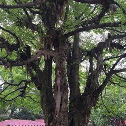 怎样种植果树?