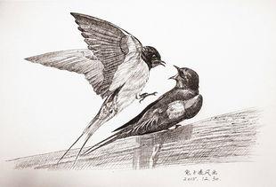 最近的中性笔画动物作品